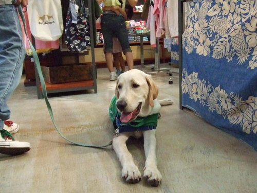 お店番犬!オンリー