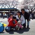 さくら祭り(2)